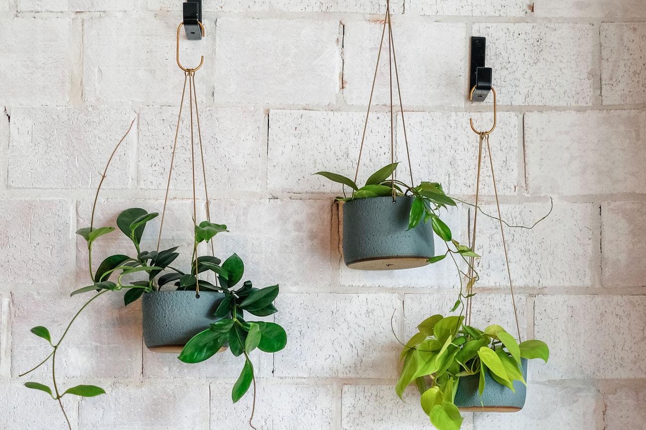 d plants